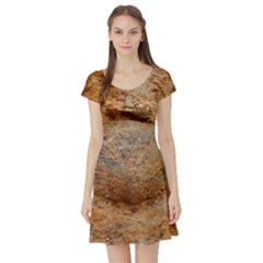 Shell Fossil Ii Short Sleeve Skater Dress by okhismakingart