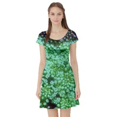 Green Queen Anne s Lace Landscape Short Sleeve Skater Dress by okhismakingart