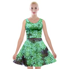 Green Queen Anne s Lace Landscape Velvet Skater Dress by okhismakingart