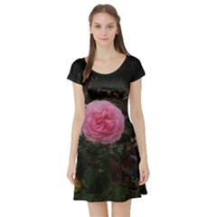 Pink Rose Field Ii Short Sleeve Skater Dress by okhismakingart