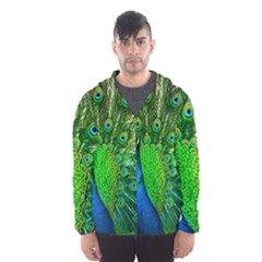 Peacock Peafowl Pattern Plumage Men s Hooded Windbreaker by Pakrebo
