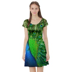 Peacock Peafowl Pattern Plumage Short Sleeve Skater Dress