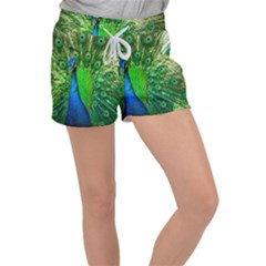 Peacock Peafowl Pattern Plumage Women s Velour Lounge Shorts by Pakrebo
