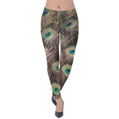 Bird Peacock Tail Feathers Velvet Leggings by Pakrebo