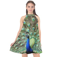Blue And Green Peacock Halter Neckline Chiffon Dress