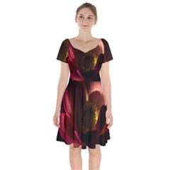 Zappwaits Water Lily Short Sleeve Bardot Dress by zappwaits