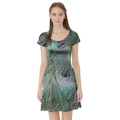 Peacock Feather Pattern Plumage Short Sleeve Skater Dress by Pakrebo