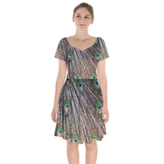 Peacock Feathers Pattern Colorful Short Sleeve Bardot Dress