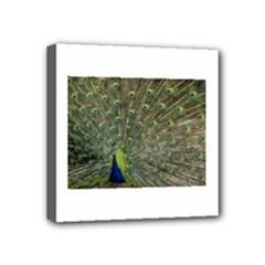 bird_15 Mini Canvas 4  x 4  (Stretched)