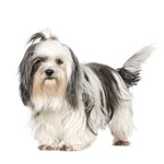 Dog Photo Gifts - Breeds S-V
