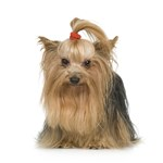 Dog Photo Gifts - Breeds W-Z