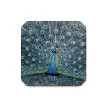 Bird Photo Coasters
