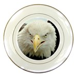 Bird Photo Porcelain Plates