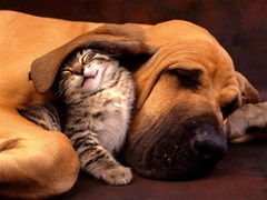 Cat and Dog the Best Friend