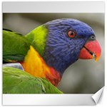 Rainbow Lorikeet Canvas 12  x 12