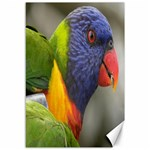 Rainbow Lorikeet Canvas 12  x 18