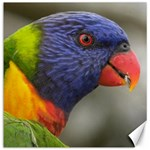 Rainbow Lorikeet Canvas 16  x 16