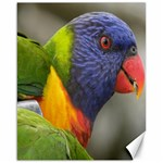 Rainbow Lorikeet Canvas 16  x 20