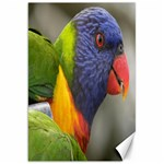 Rainbow Lorikeet Canvas 20  x 30