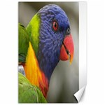 Rainbow Lorikeet Canvas 24  x 36