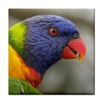 Rainbow Lorikeet Face Towel
