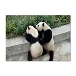 Let Me Kiss You Pandas In Love Sticker A4 (100 pack)