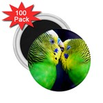 Kiss And Love Lovebird 2.25  Magnet (100 pack)