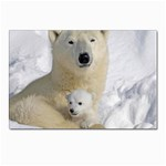 In Moms Arm Mothers Love Postcard 4  x 6