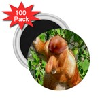 Proboscis Big Nose Monkey 2.25  Magnet (100 pack)