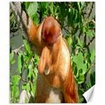 Proboscis Big Nose Monkey Canvas 8  x 10