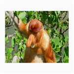 Proboscis Big Nose Monkey Glasses Cloth (Small, Two Sides)