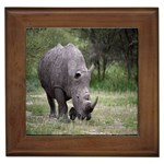 Wild Animal Rhino Framed Tile