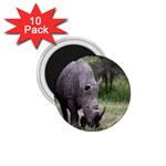 Wild Animal Rhino 1.75  Magnet (10 pack)