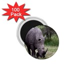 Wild Animal Rhino 1.75  Magnet (100 pack)