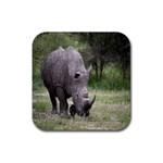 Wild Animal Rhino Rubber Square Coaster (4 pack)