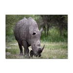 Wild Animal Rhino Sticker A4 (10 pack)