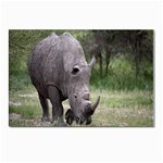 Wild Animal Rhino Postcard 4 x 6  (Pkg of 10)