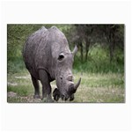Wild Animal Rhino Postcard 5  x 7