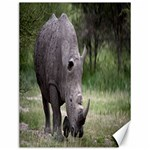 Wild Animal Rhino Canvas 12  x 16