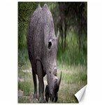 Wild Animal Rhino Canvas 12  x 18