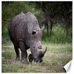 Wild Animal Rhino Canvas 20  x 20