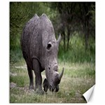 Wild Animal Rhino Canvas 20  x 24