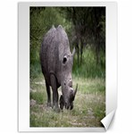 Wild Animal Rhino Canvas 36  x 48