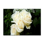 White Rose Sticker A4 (100 pack)
