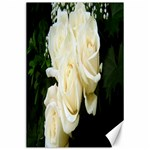 White Rose Canvas 24  x 36