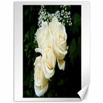 White Rose Canvas 36  x 48