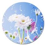 White Gerbera Flower Refresh From Rain Magnet 5  (Round)