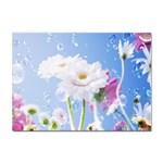 White Gerbera Flower Refresh From Rain Sticker A4 (100 pack)