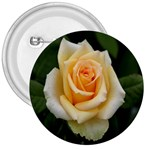 Yellow Rose 3  Button