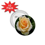 Yellow Rose 1.75  Button (10 pack)